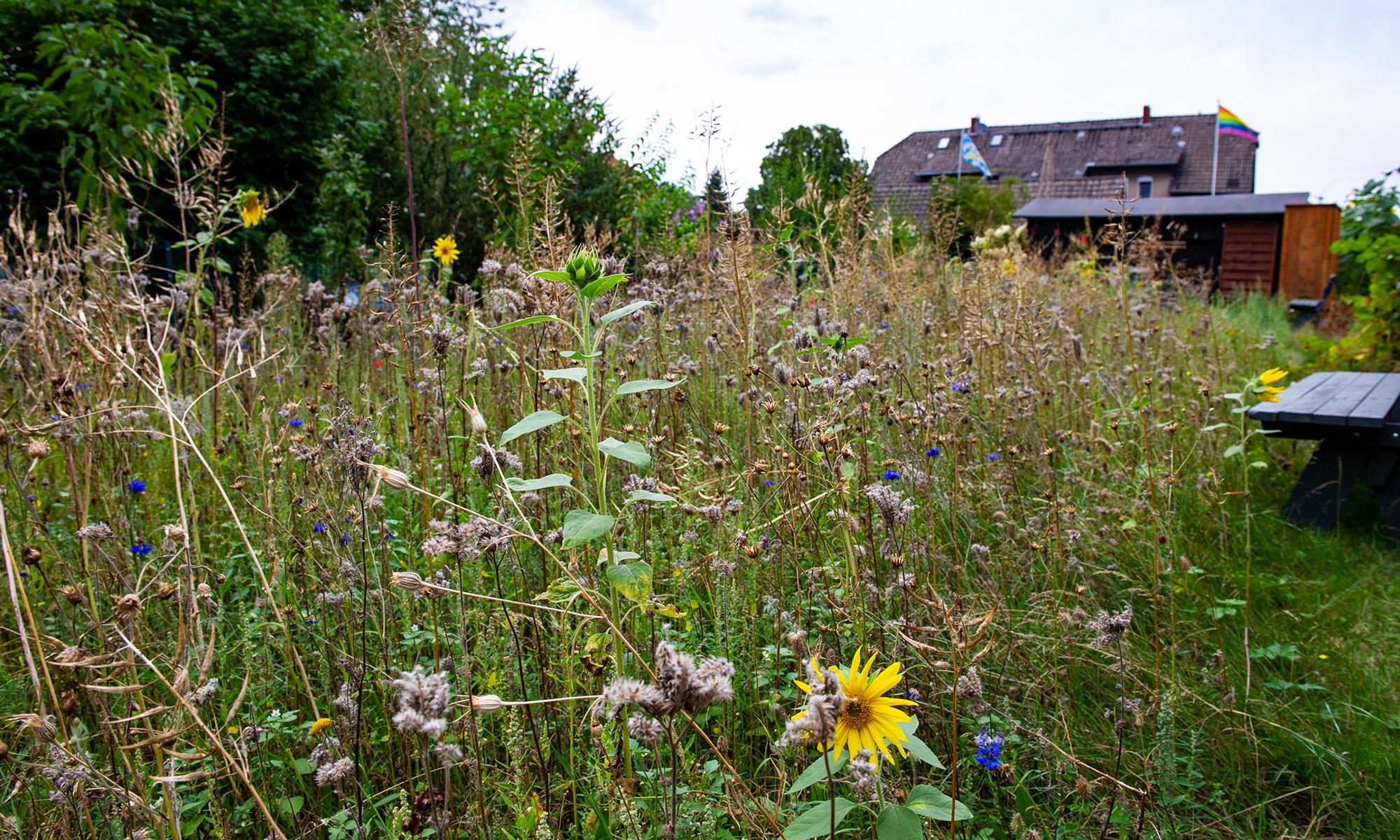 Holgi sein Garten seine Internetseite